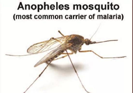 图片来源:http://www.sundaynews.co.zw/all-about-malaria/