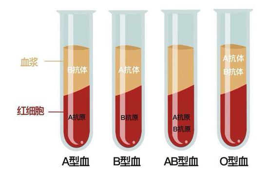 ABO血型分类。(绘制:王雪莹)