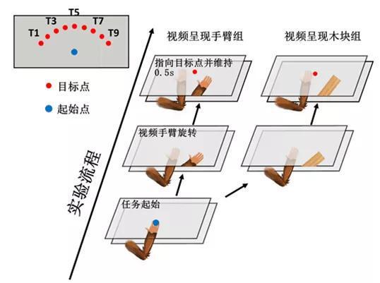 图1 人和猕猴实验设备和走为学义务暗示图
