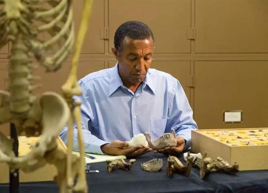 约翰尼斯在办公室研究人类化石 (图片来源:Cleveland Museum of Natural History)