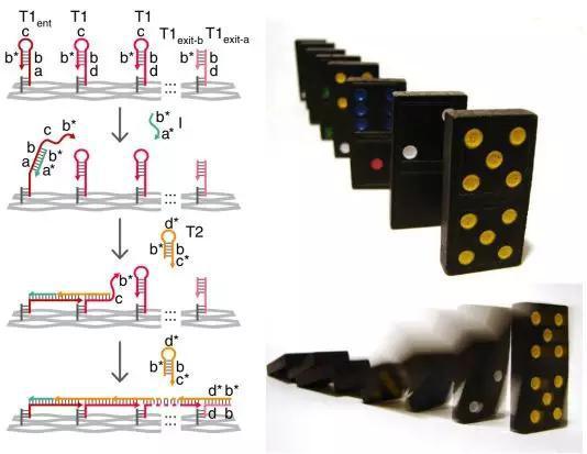 这个纳米领航员机器人的做事手段很像行家常见的众米诺骨牌