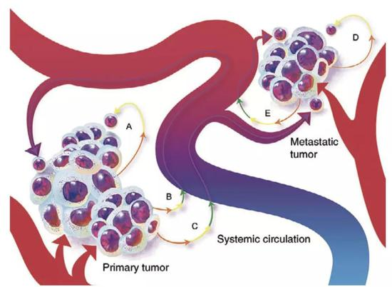 癌细胞大义灭亲