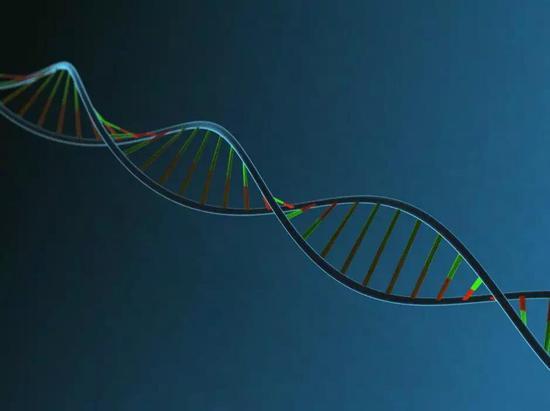 斐波拉契螺旋线——DNA的双螺旋结构