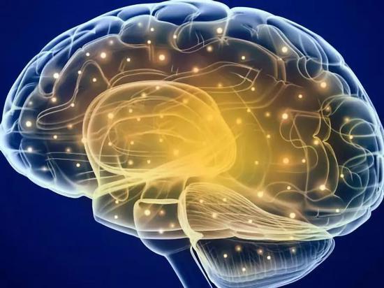 海馬體的信息傳遞。圖片來源:《自然-神經科學》