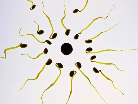与黑猩猩相比,人类缺乏直接的精子竞争。(来源:pixabay)