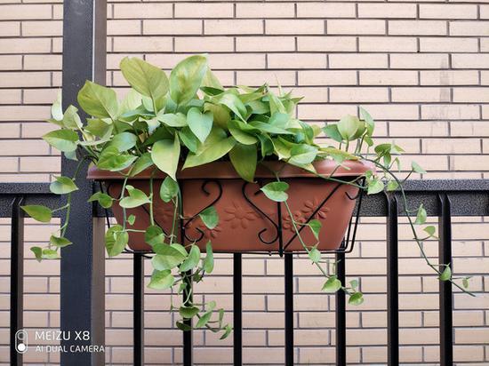 魅族X8绿植拍照样张