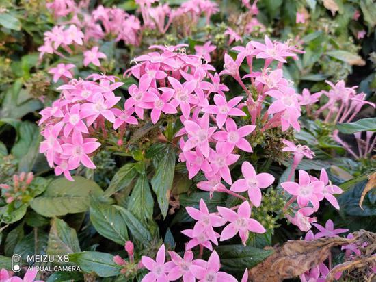 魅族X8花卉拍照样张