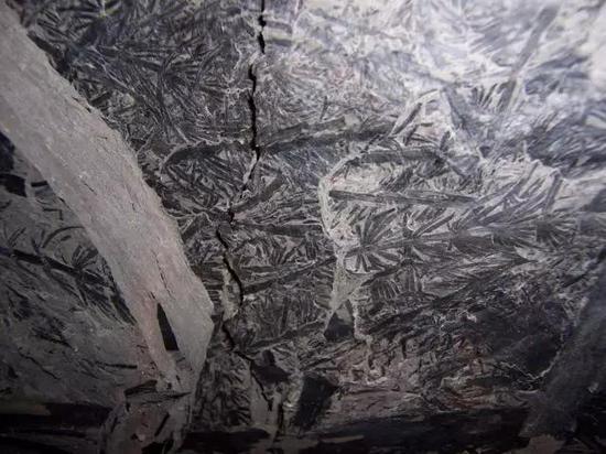 图5 植物化石常常与煤炭形成有关