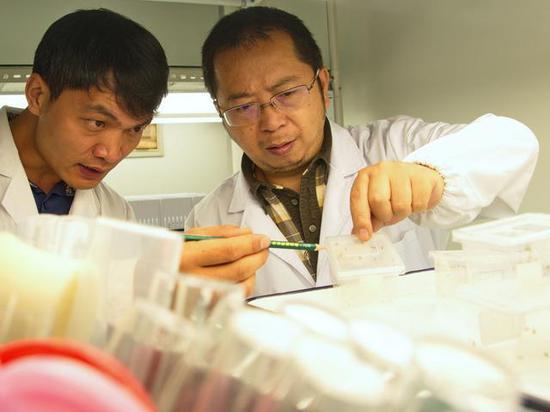 权锐昌钻研员(右)和陈占首博士(左)在实验室钻研大蚁蛛(供图:王晓亮/中科院科技摄影联盟)