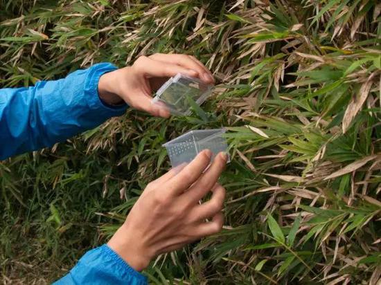 钻研人员在田园采集大蚁蛛(图片来源:中科院科技摄影联盟王晓亮)