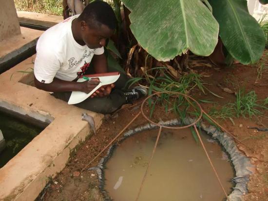 ▲本研究的作者之一Etienne Bilgo博士在观察蚊子的野外繁殖(Credit:Oliver Zida)