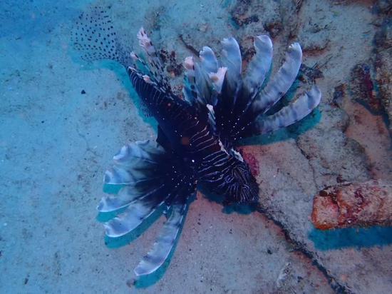 图片来源:刀哥潜水百科