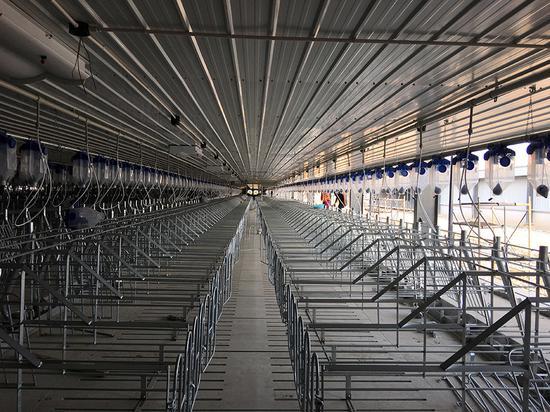母猪二场工厂化猪舍。澎湃新闻记者 程真 图
