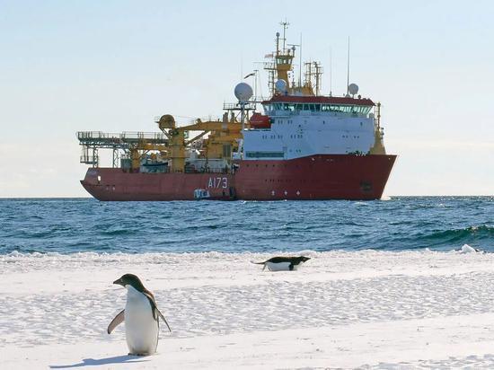 企鹅似乎毫不介意人类靠近自己。图片:Royal Navy Media Archive / flickr