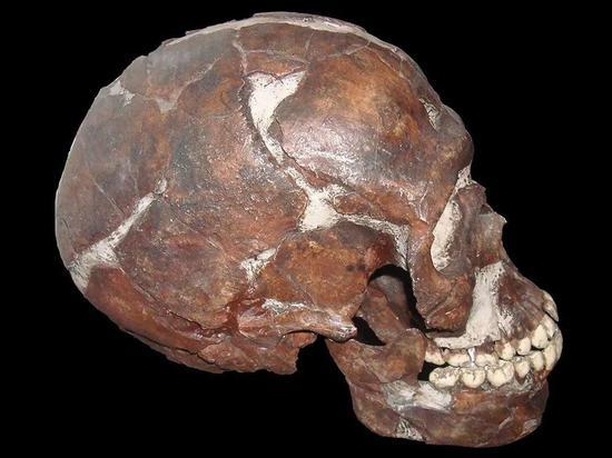 在以色列卡夫泽发现的头骨,现藏于美国天然前史博物馆