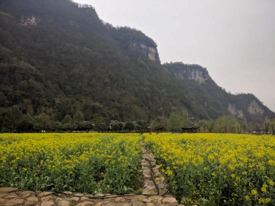 中国南方的山很多都是这种灰灰的,这些都是灰岩图/沈梦溪