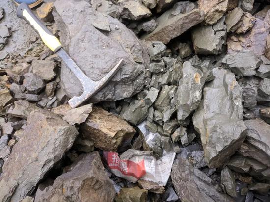 这堆石块里面,随手一敲都有化石,不是三叶虫就是菊石,或者是某些双壳图/沈梦溪