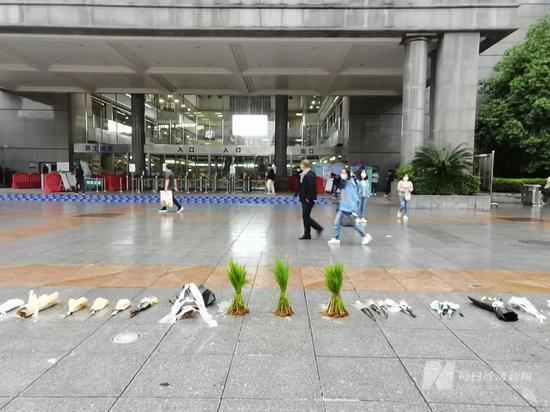 中南大学湘雅医院门口,三棵水稻秧苗格外显眼    图片来源:每经记者 陈晴 摄