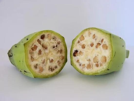 野生香蕉在没有转基因之前根本不能吃(图源:Wikipedia)