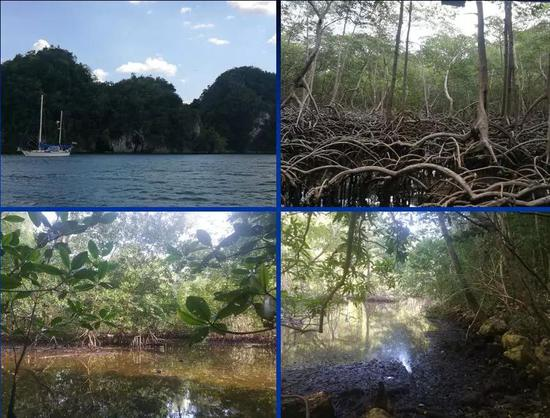 科研人员推测与缅甸琥珀森林相似的场景(中美洲多米尼加的海岸森林)