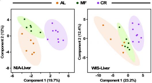 NIA和WIS饮食方案下,小鼠随意进食(AL)、只吃一顿(MF)和热量限制(CR)肝脏代谢组的差异