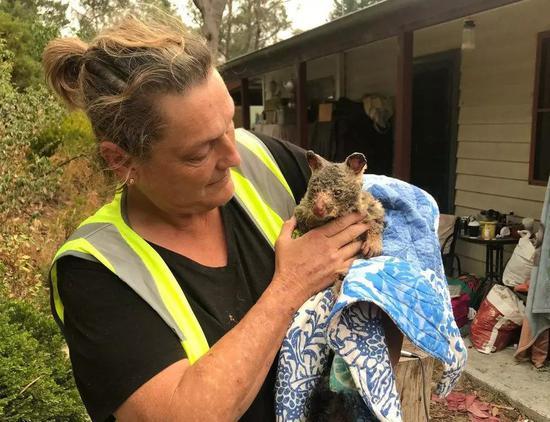 在火灾中受伤的负鼠。(图片来源:REUTERS)