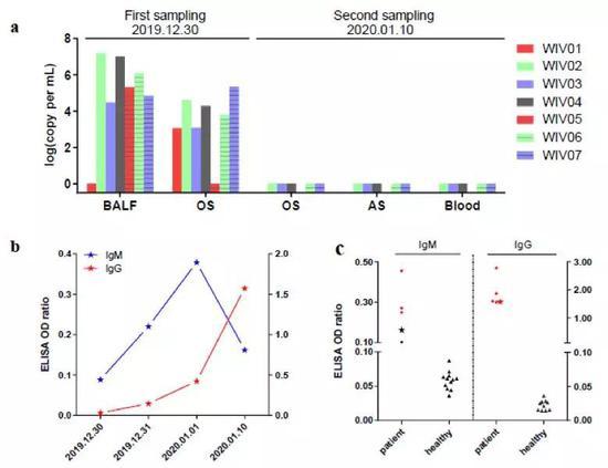 图2。 七位患者体内病毒核酸检测(a);一位2019年12月23日出现发病症状的患者体内血清学变化情况(b);七位患者抗体水平检测(c)。