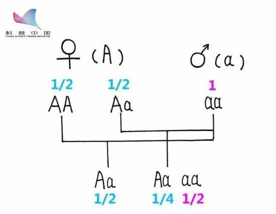 基因组相符(图源:作者自制)
