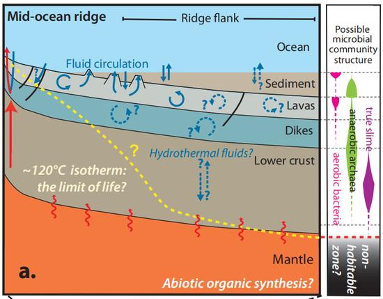 大洋中脊侧翼的微生物群落结构假说