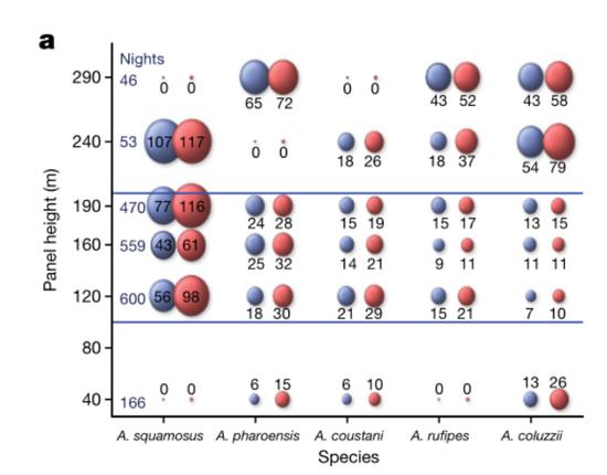 不同飞行高度捕捉到的蚊子种类及数量