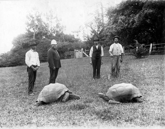1882年就被带到圣海伦娜岛的乔纳森(左龟) (图片来源/Special Travel International)