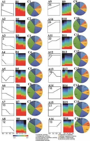 水稻中的干旱记忆基因表达模式(李萍制图)