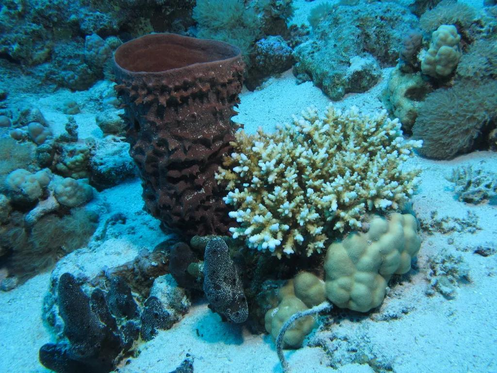 海绵 图片来源:wikimedia