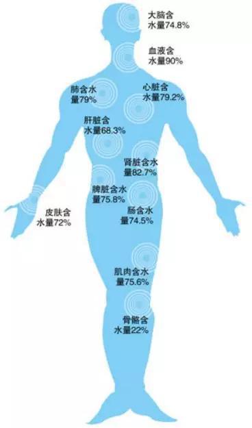 图:肌肉的含水量高达75.6%