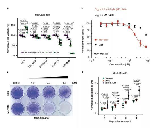 ▲MS1943與C24對MDA-MB-468細胞作用效果的對比(圖片來源:參考資料[1])