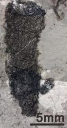 一种新发现的海绵。
