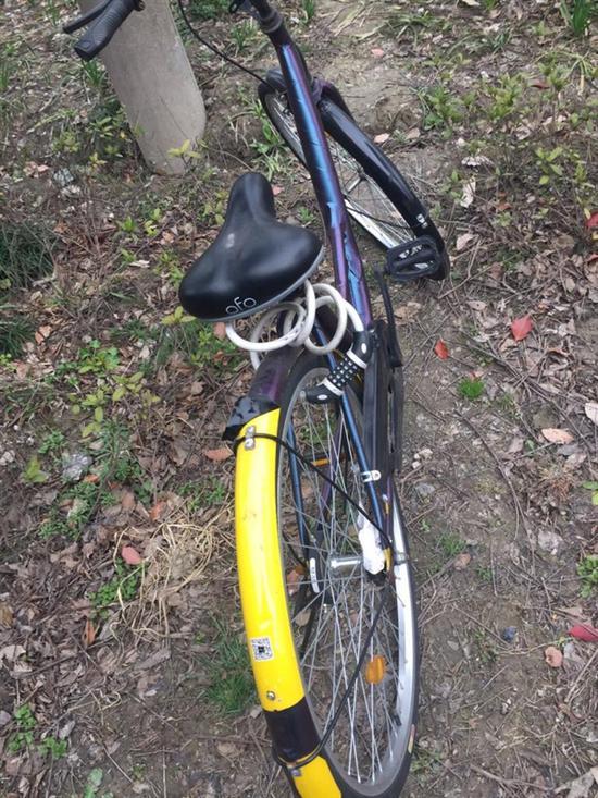ofo单车被上私锁 90后孕妇扛一公里不让对方找到的照片 - 2