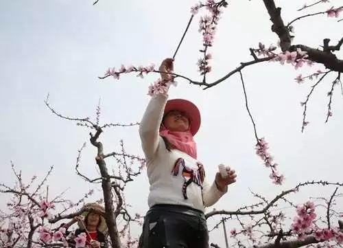 """▲""""蜜蜂人""""(图片来自网络)"""