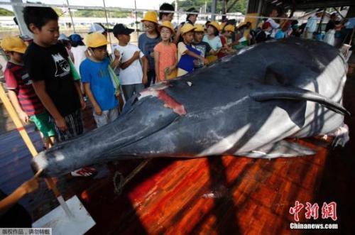 资料图:日本捕杀鲸鱼