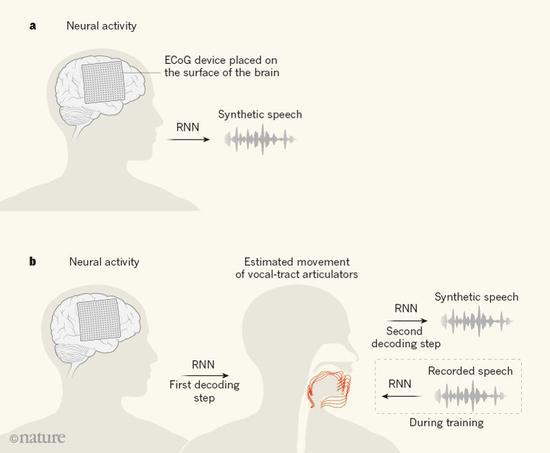 图1:语音合成的脑机接口