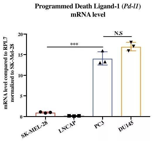前列腺癌细胞的PD-L1mRNA的水平要高得多