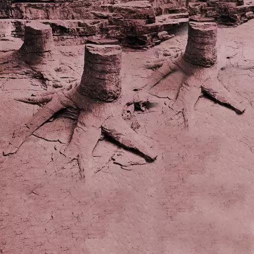 图1美国纽约州北部吉尔博泥盆纪树桩化石
