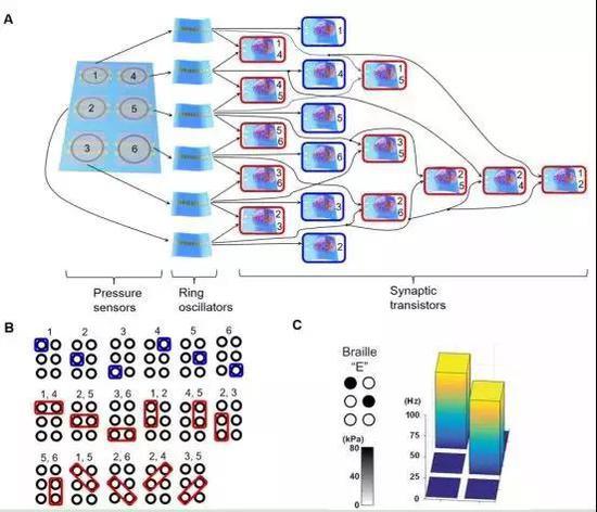 图 人造传入神经系统用于盲文阅读