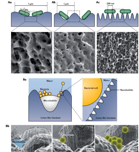 细菌以不同方式附着于纳米表面上