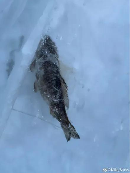网友拍摄的长春冰雪世界冰雕中的鱼来源 | 见水印