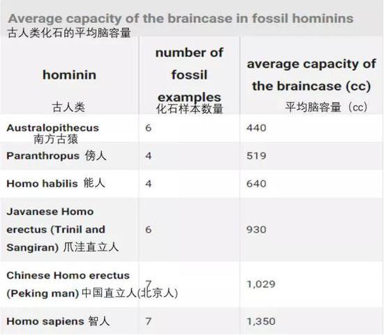 各种化石样本的数量及平均脑容量。图源:https://www.britannica.com/science/human-evolution/Increasing-brain-size