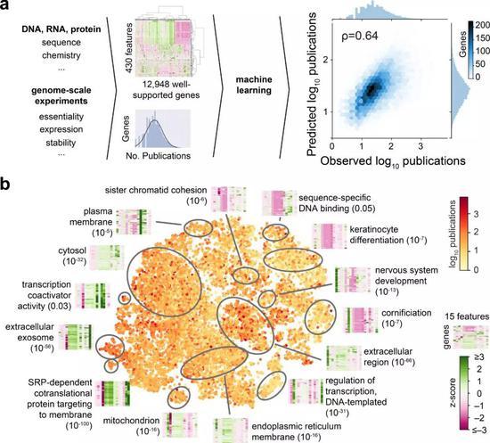 ▲少数几个特征决定了基因会不会得到大量研究(图片来源:参考资料[1])