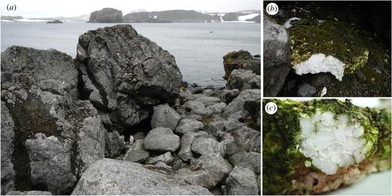 南极陆地环境中的塑料污染。左图(a)为塑料泡沫发现的海滩,右边两幅图(b, c)是发现的塑料泡沫的照片,泡沫表面长满了藻类、苔藓和地衣。