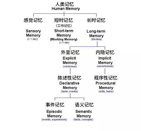 记忆的分类。原图来源:Luke Mastin