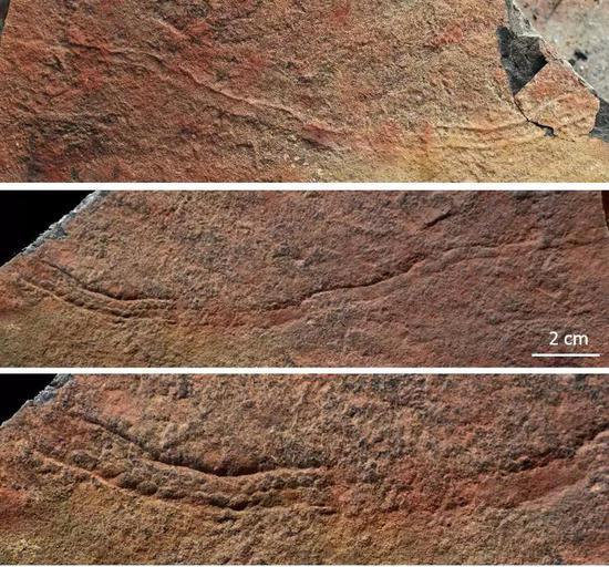 夷陵虫的遗迹化石,你能看出它们与实体化石区别吗?(答案见文末)(图片来源:南京古生物所)